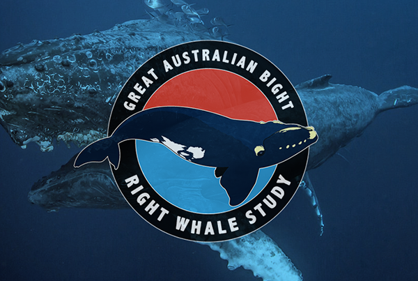 Great Australian Bight Right Whale Study